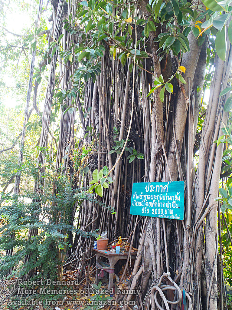 I'm not sure but I think the sign says this is a 2000 year old tree. What you see here are the roots of the tree. Note the little Buddha set up.