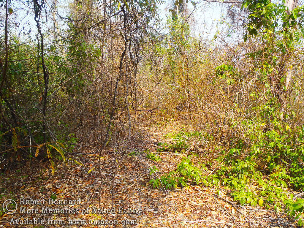 This used to be a road but the jungle has almost completely taken it back. It was impassable on the dirt-bike.